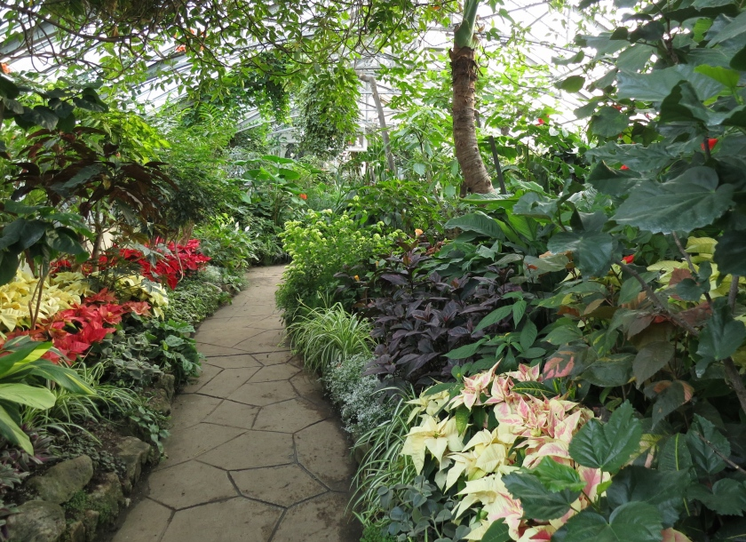 A path inside Allan Gardens Conservatory in Toronto
